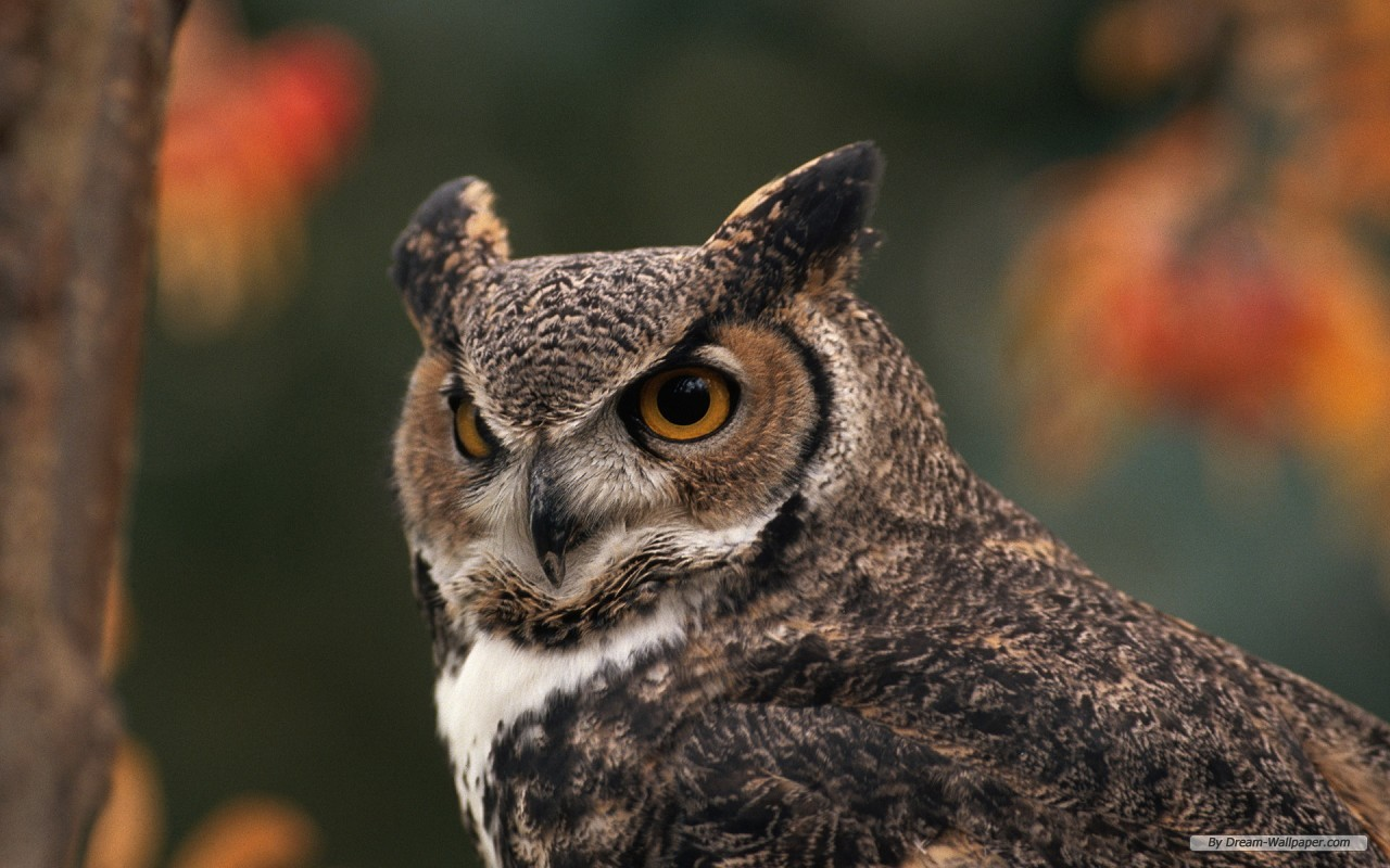 Animal Free Owl And Eagle 219204 Wallpaper wallpaper