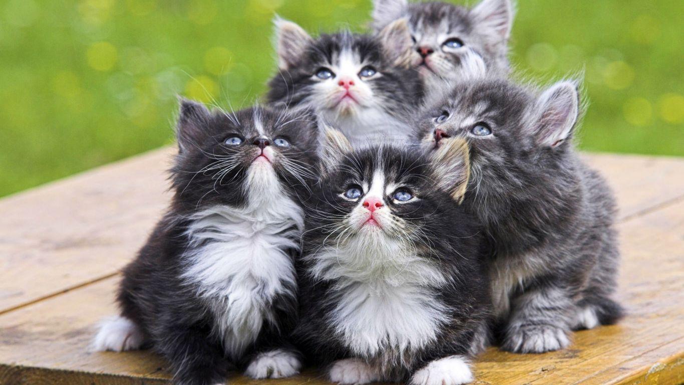 Animes Amazing Four Cats Free 152411 Wallpaper