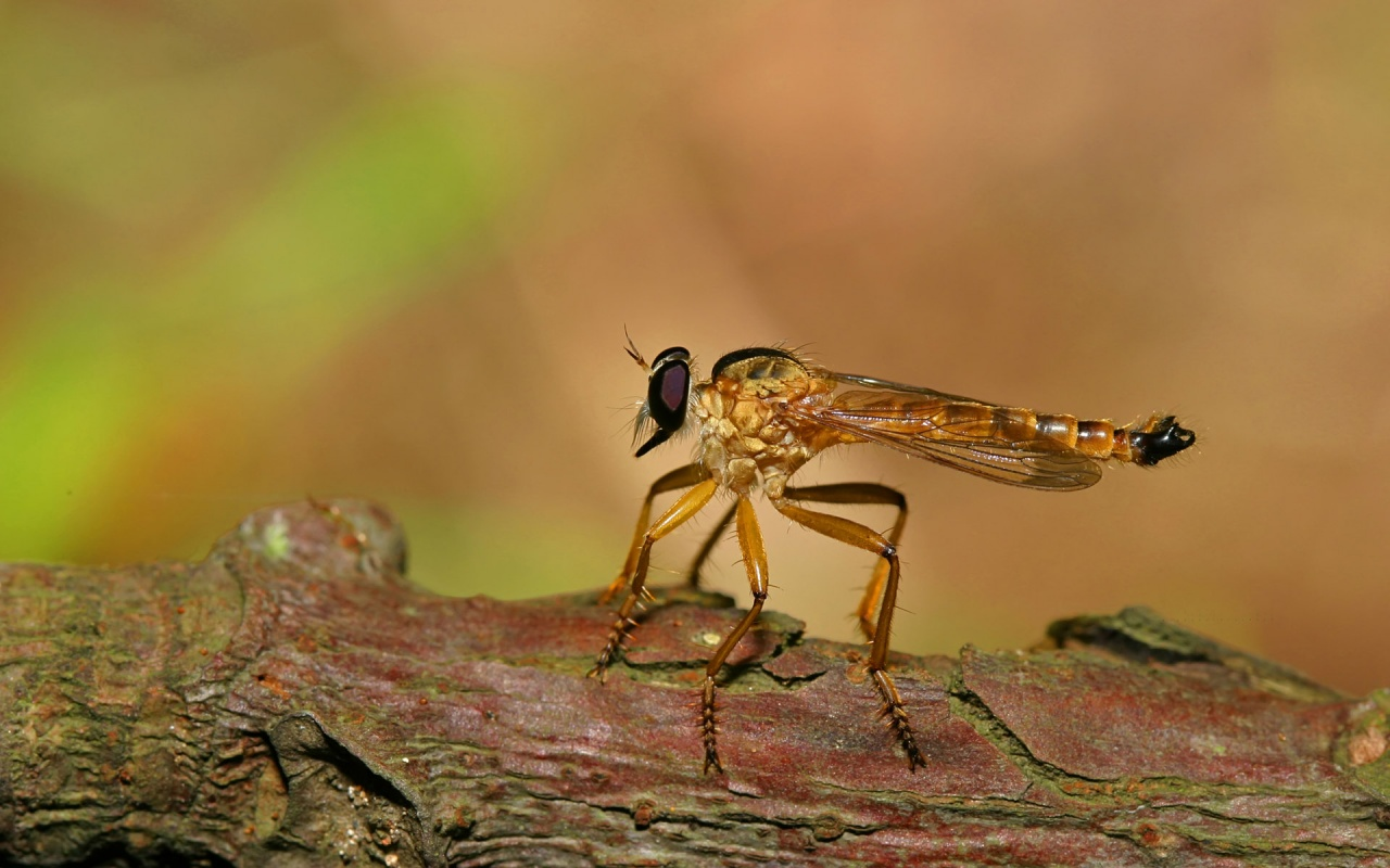 Animal Anime Insect In A Tree 253372 Wallpaper wallpaper