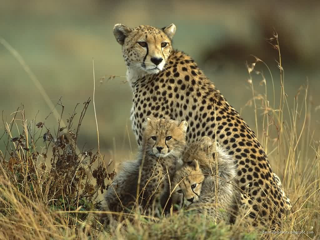 Images Of Wild Animals Wild Animals Wallpaper