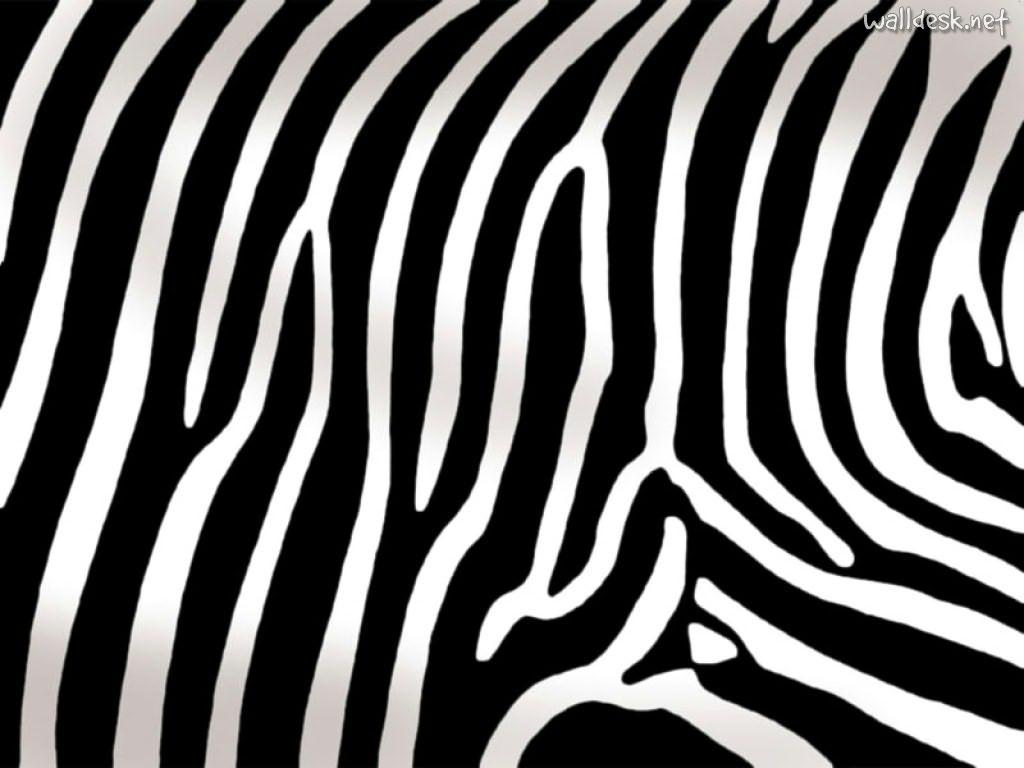 Animal Print Fondos De Pantalla Zebra Papeis Escritorio Texturas 71122 Wallpaper wallpaper