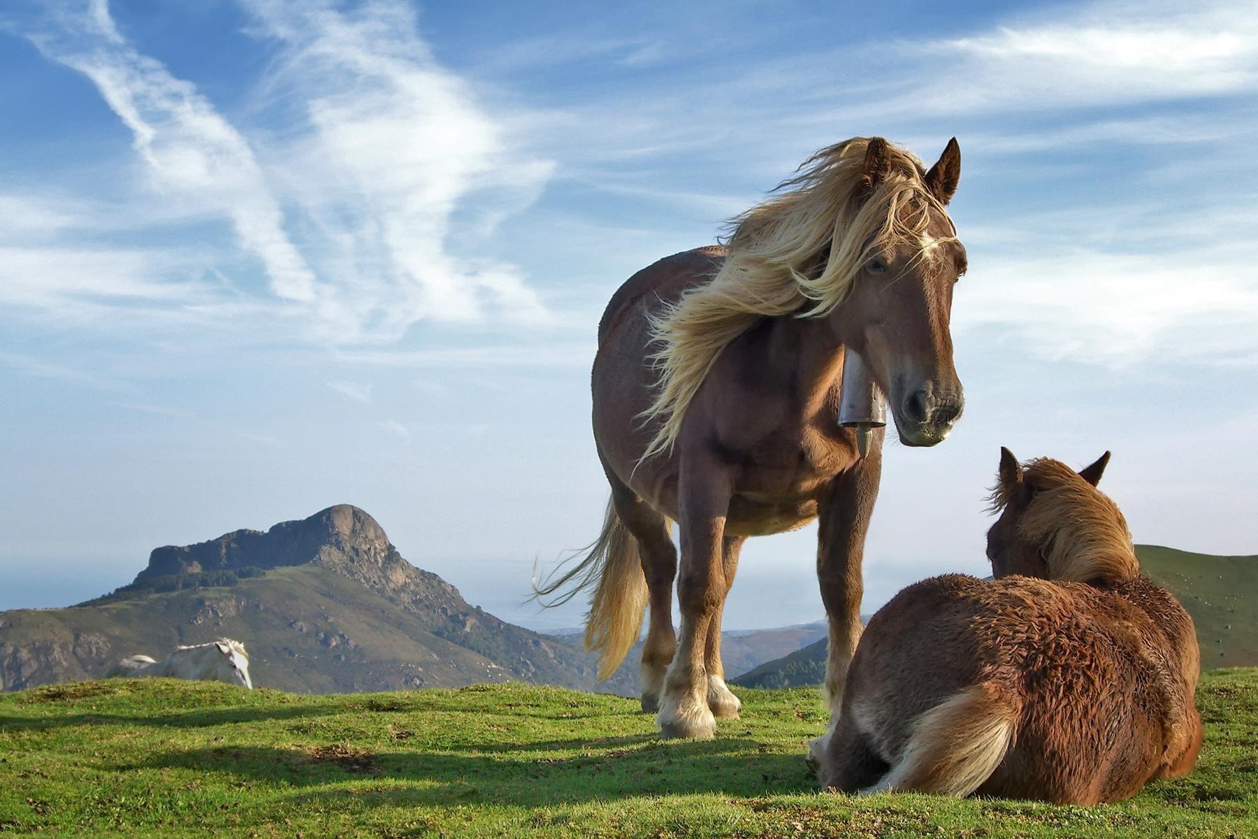 Wild Animals Hi Bebo Orkut Twitter Horses Stallions 283055 Wallpaper