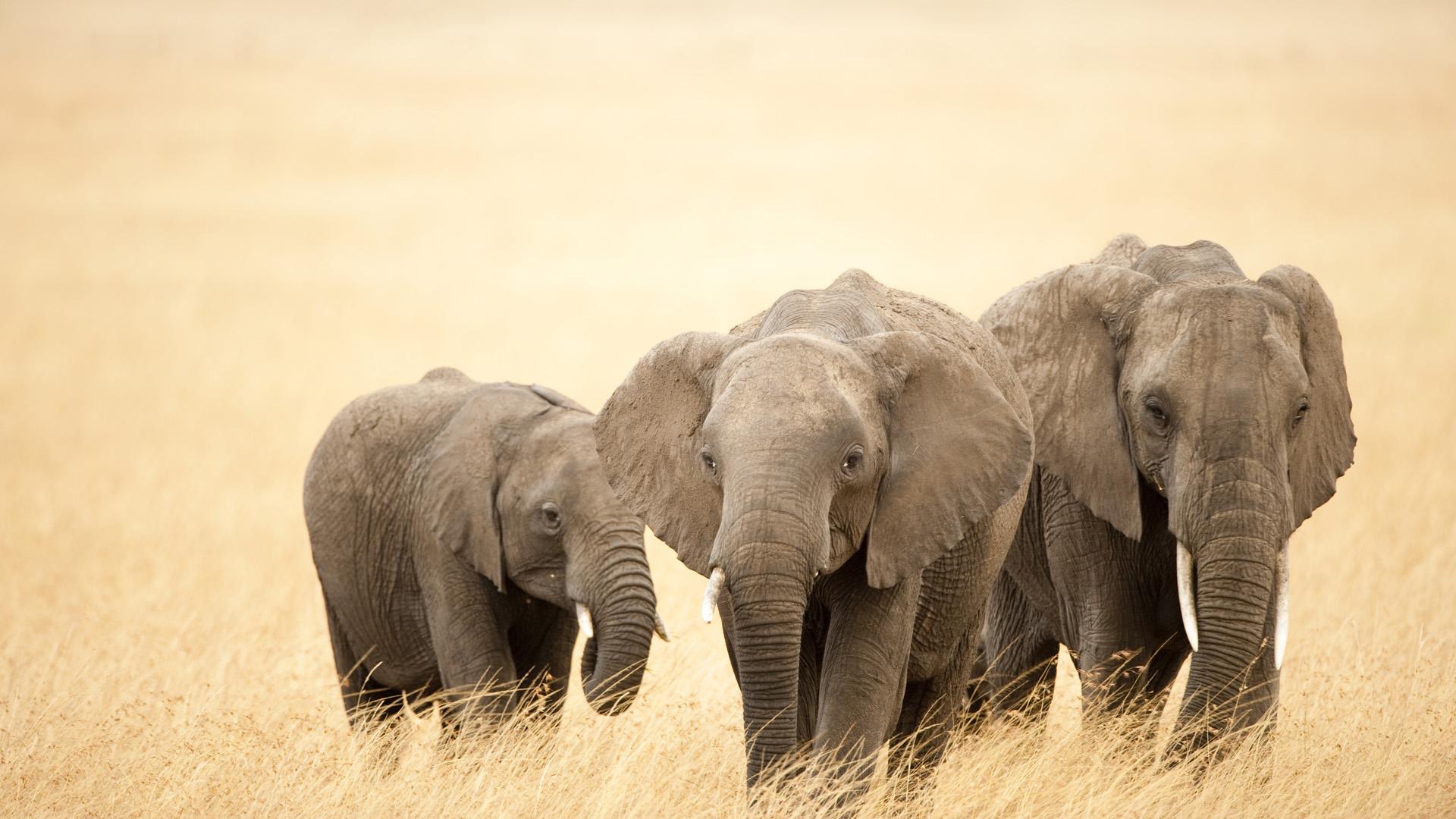 Hd wallpaper elephant - Elephant Art Wallpapers Hd Resolution