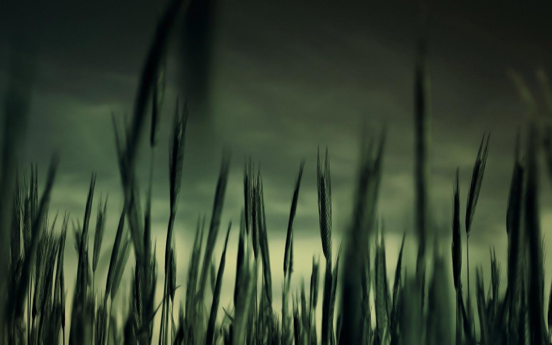 dark abstract hd field place com 90561 wallpaper wallpaper