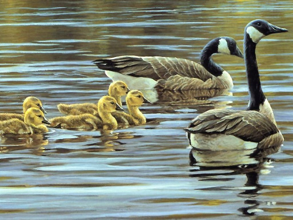 African Animals Swan And Free To Patos 159161 Wallpaper wallpaper