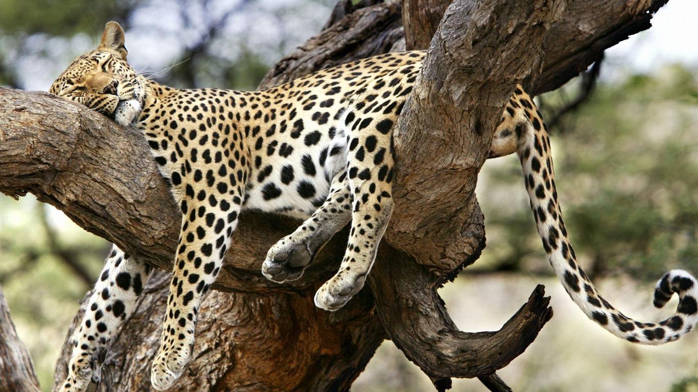 Animal Webshots V Site 360153 Wallpaper