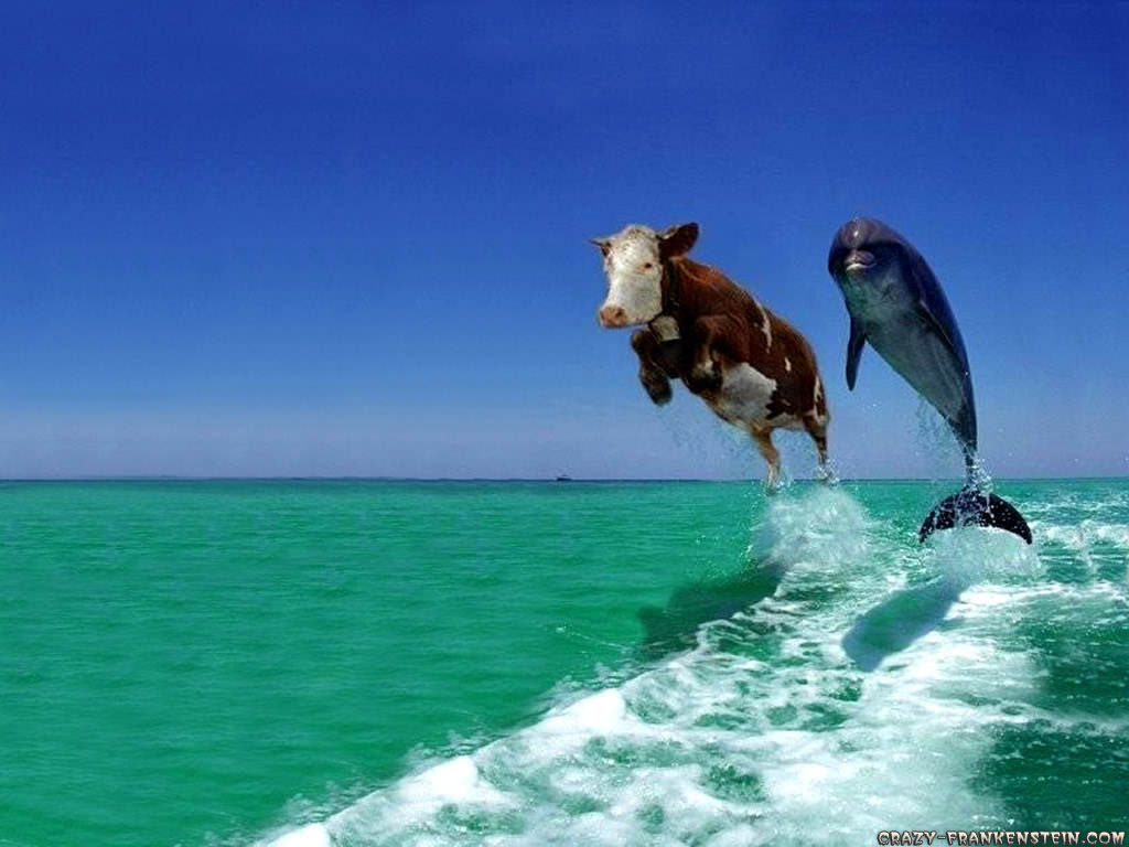 Animal Cow And Dolphin Fake Comedy Funny 105123 Wallpaper