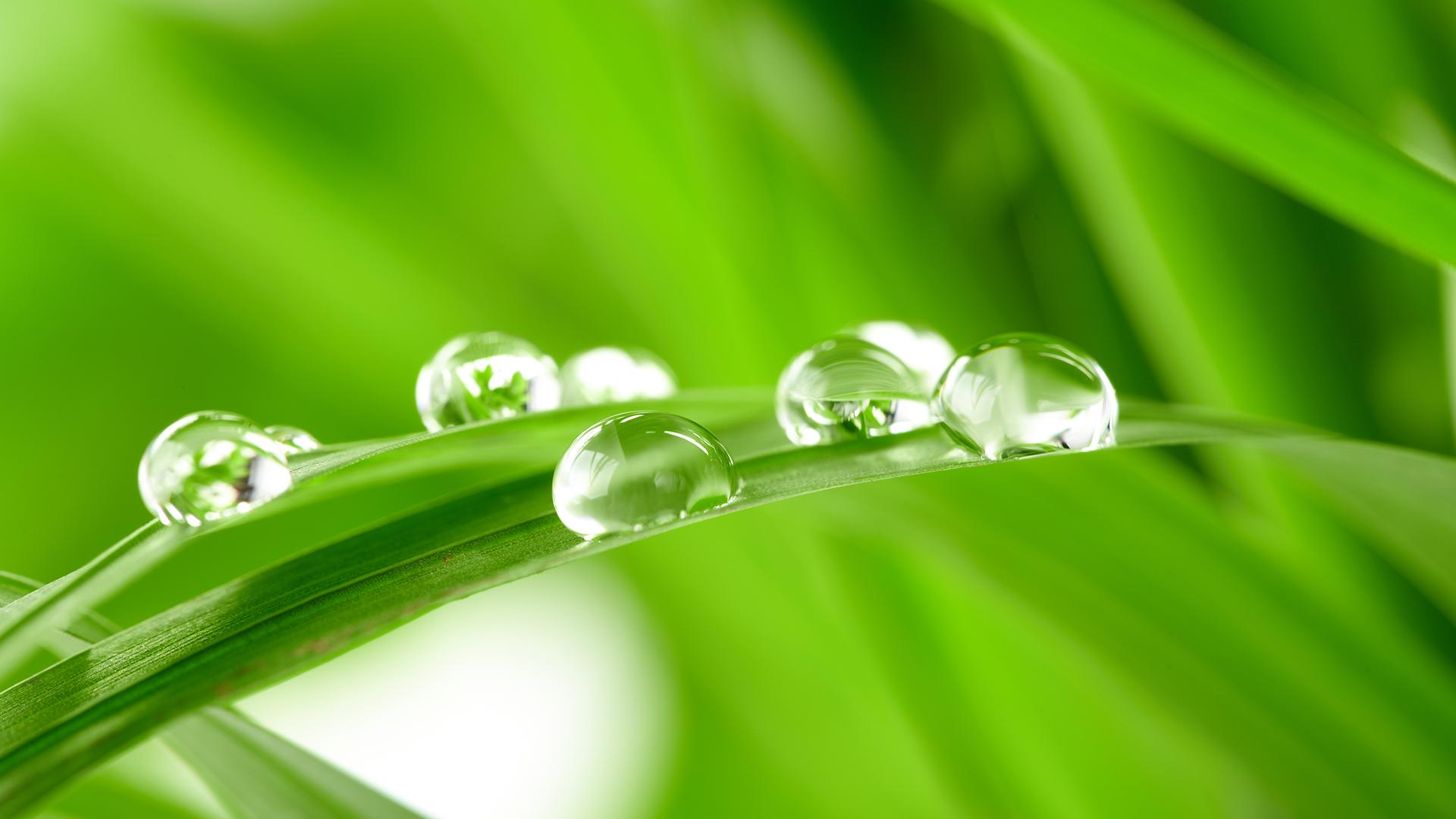 Abstract Water Drops Prev Diamond Like On Leaves Next 104706 Wallpaper wallpaper
