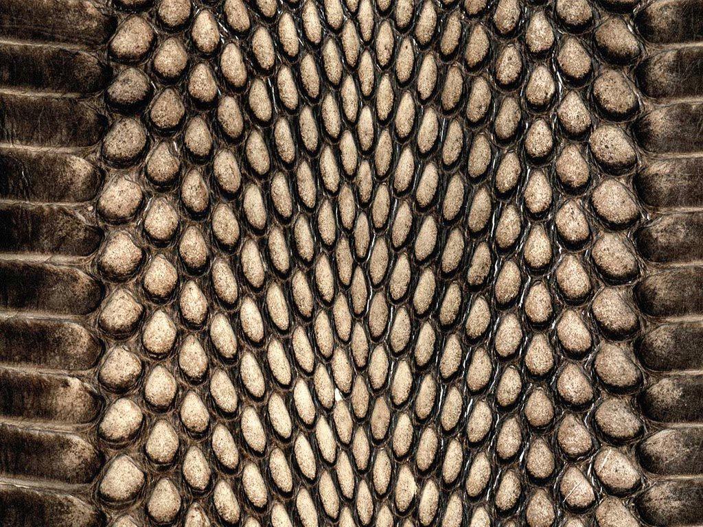 animal skin patterns - photo #7