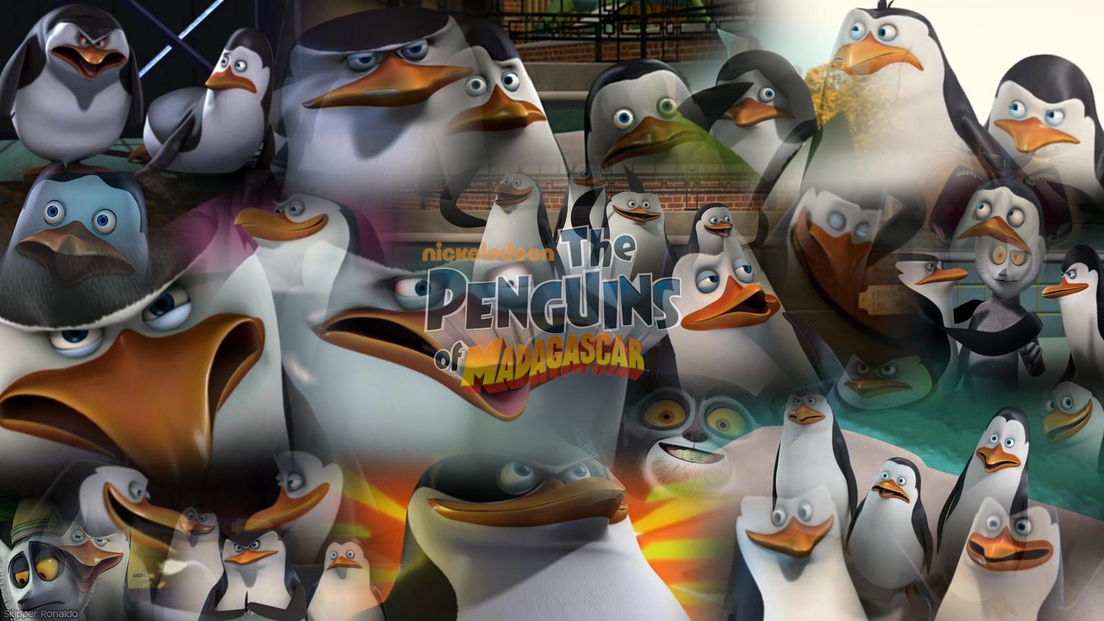 the penguins of madagascar los ping inos de taringa 867220 wallpaper
