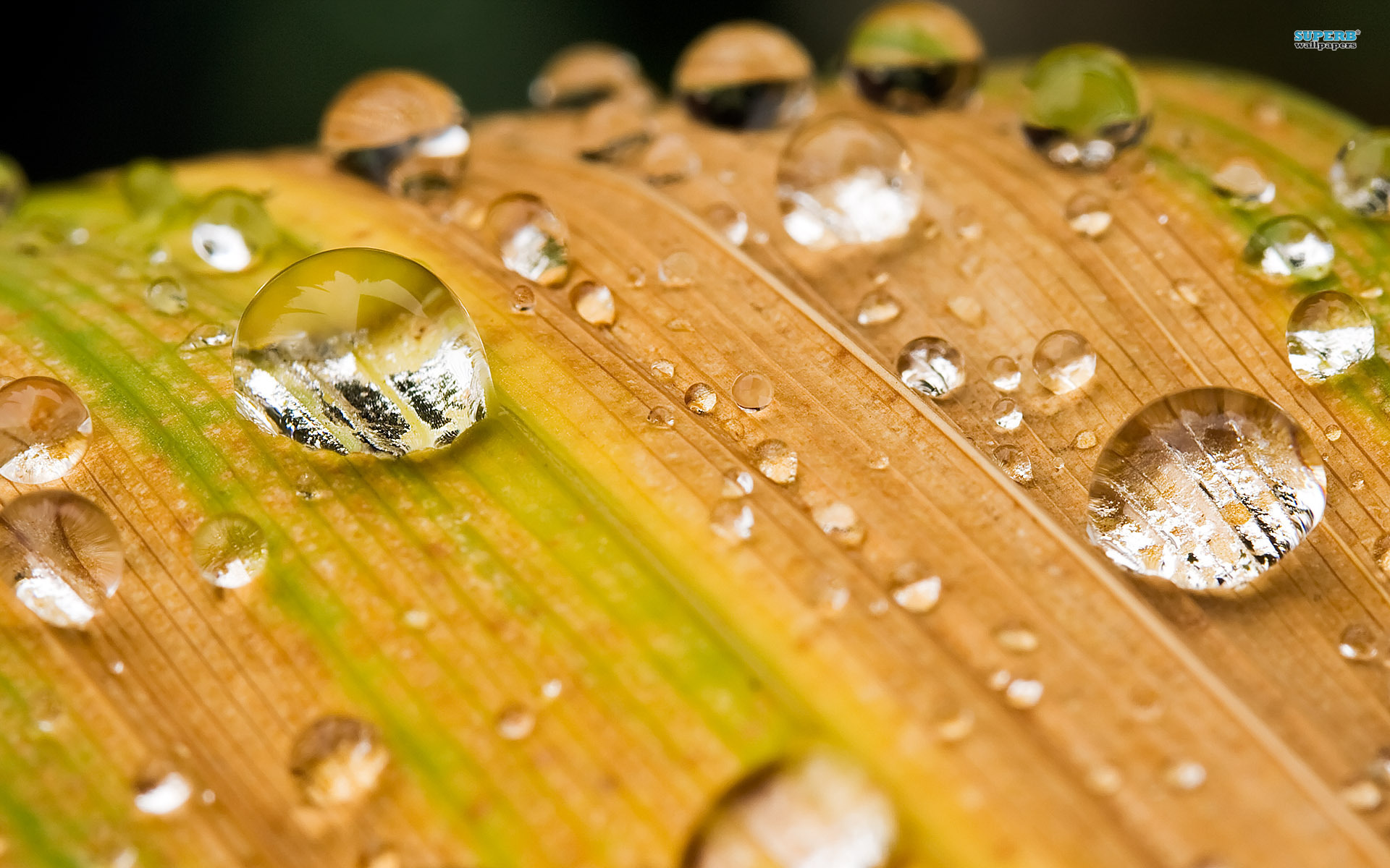 Abstract Water Drops On A Leaf Artistic 491636 Wallpaper wallpaper