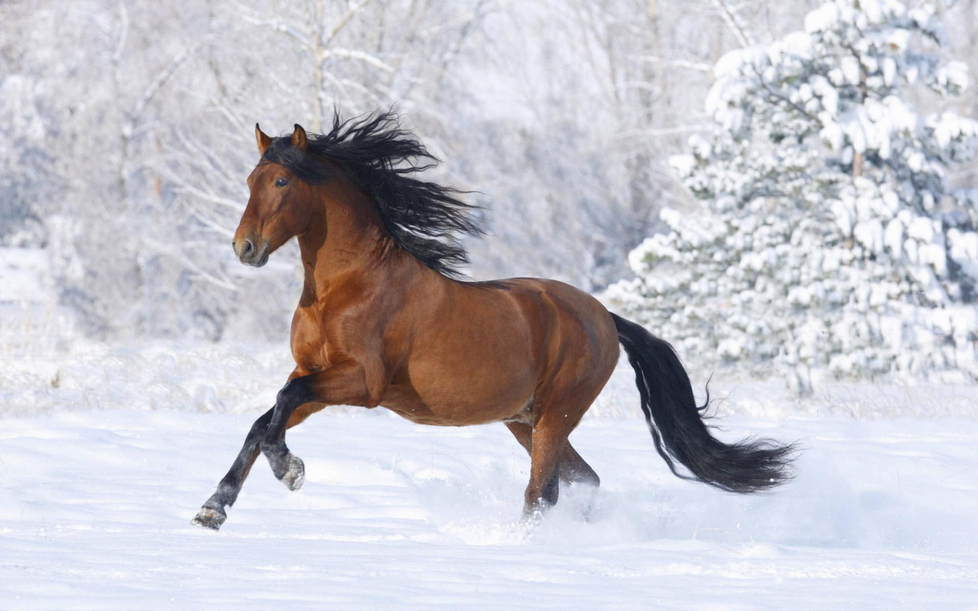 Racing Cars Horse Hd Free For 245833 Wallpaper wallpaper