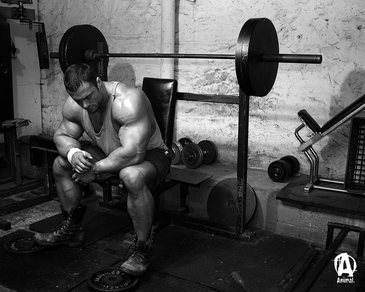 Animal Pak Bodybuilding Com Forums 309453 Wallpaper Wallpaper