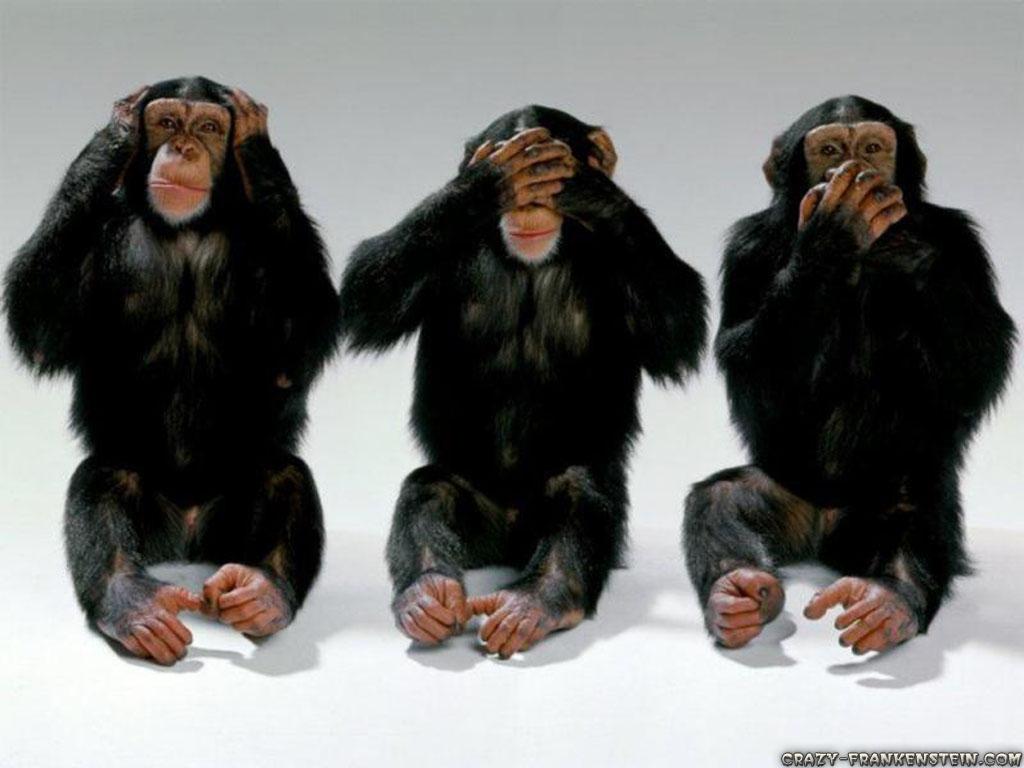 Animal Three Monkeys 107097 Wallpaper wallpaper