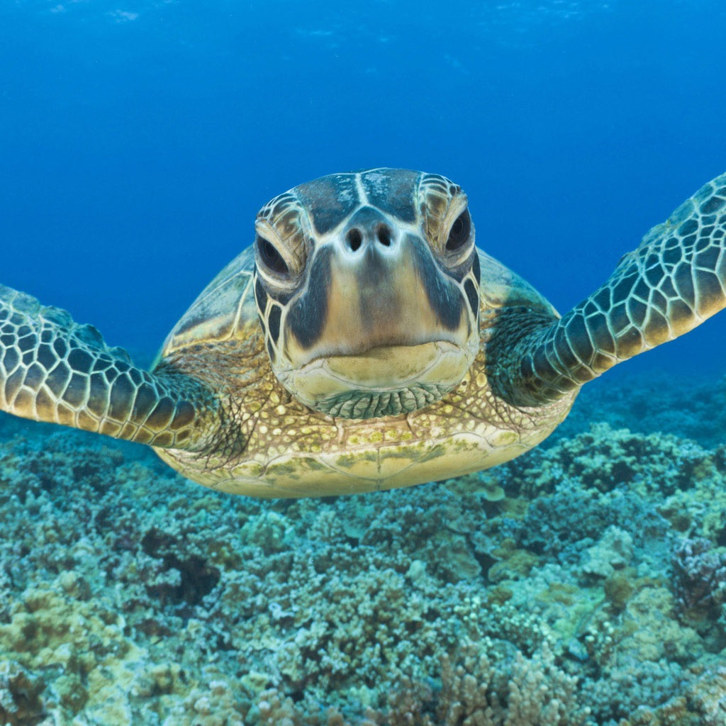 Baby Animals Turtle Or A Tortoise Ipad 280225 Wallpaper wallpaper