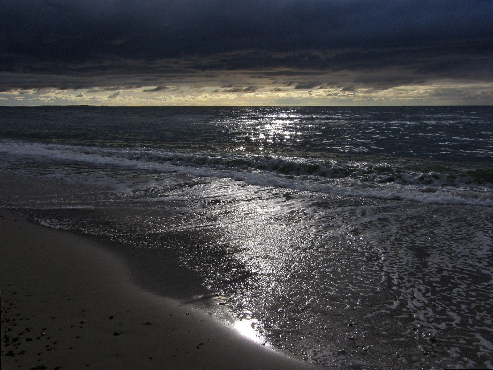 animal jungle wonderful evening on the beach of free beaches 669025