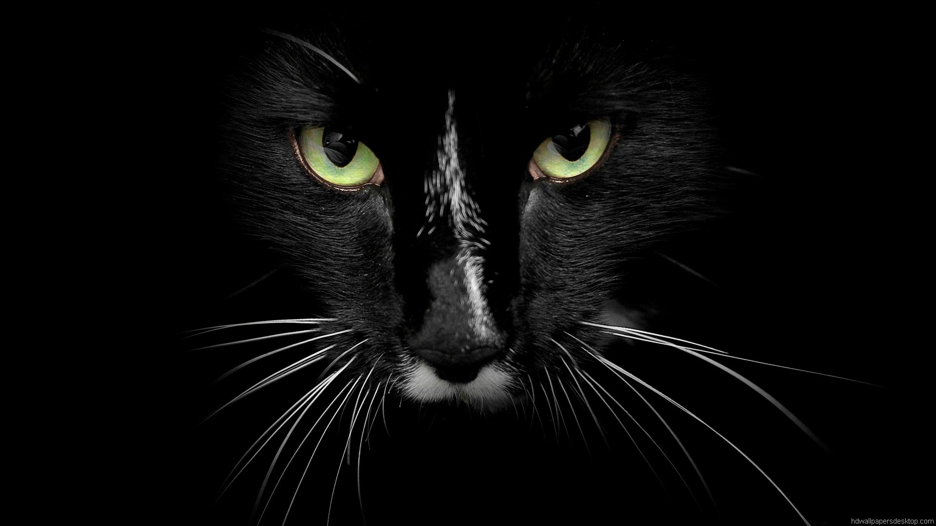animals full hd jpg 356321 wallpaper wallpaper
