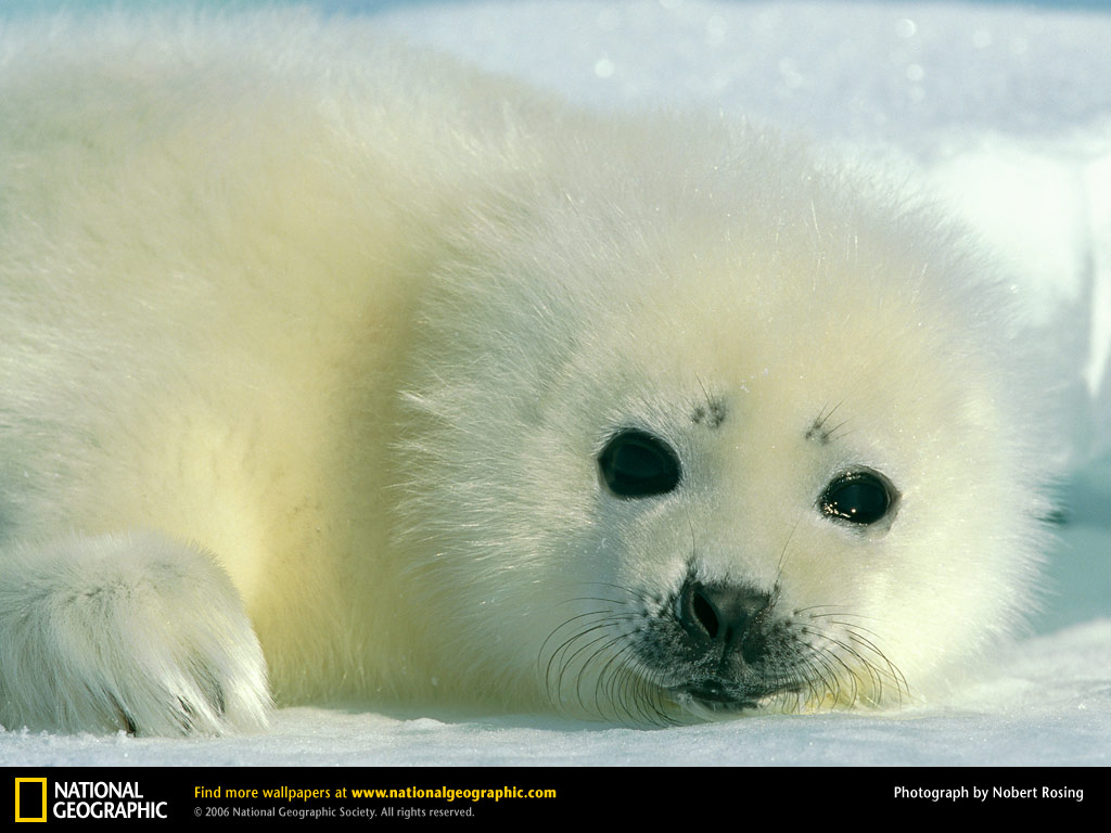 Baby Animals Photos From National Geographic And Funny Animal 130892 Wallpaper wallpaper