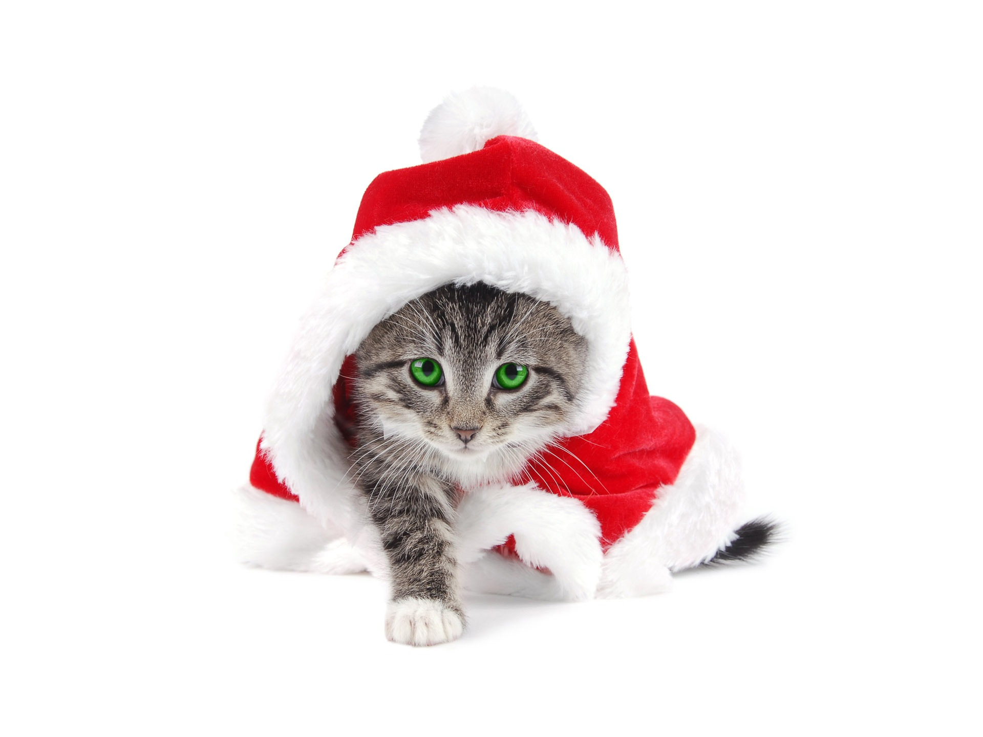 Animal Anime Of A Cat With Santa Claus Hat 211257 Wallpaper wallpaper