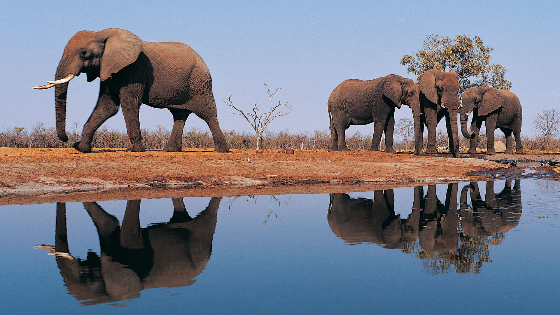Download Wallpaper Cartoon Elephant - cartoon-elephant-desktop-509801  Picture_503425  .jpg