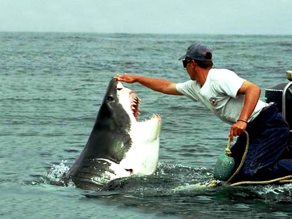 Sharks Animal Animals Fish Page 101721 Wallpaper Wallpaper