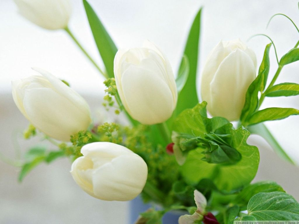 Boats Posted In Flowers Green Tags 70672 Wallpaper wallpaper