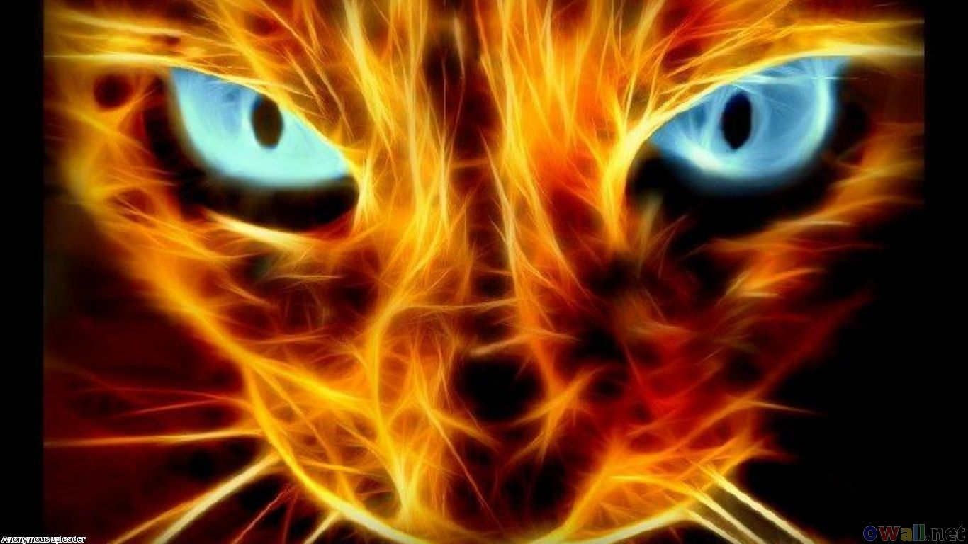 Abstract Cat Burning Open Walls 432884 Wallpaper wallpaper