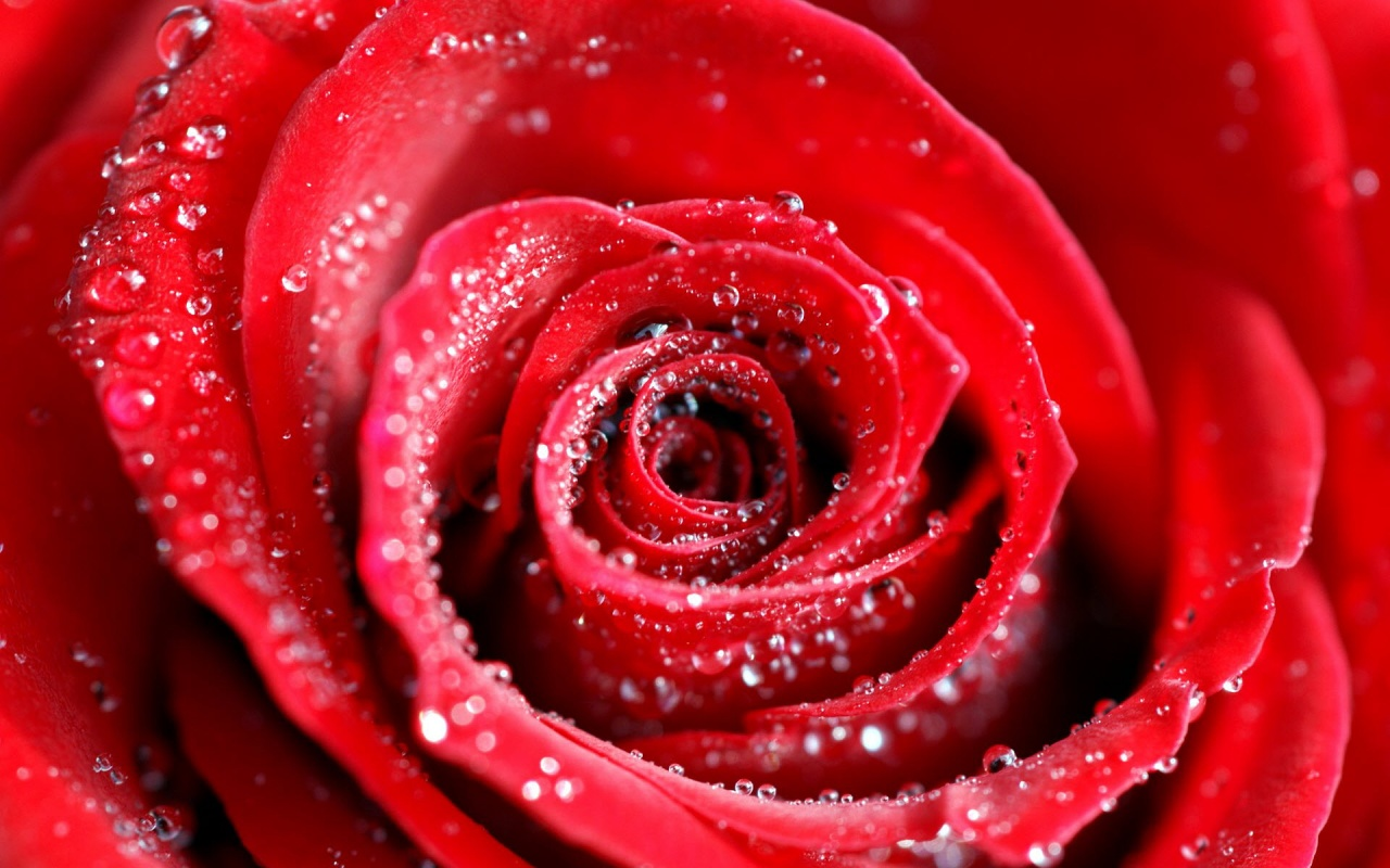 Red Abstract Water Drops On Rose 285521 Wallpaper wallpaper