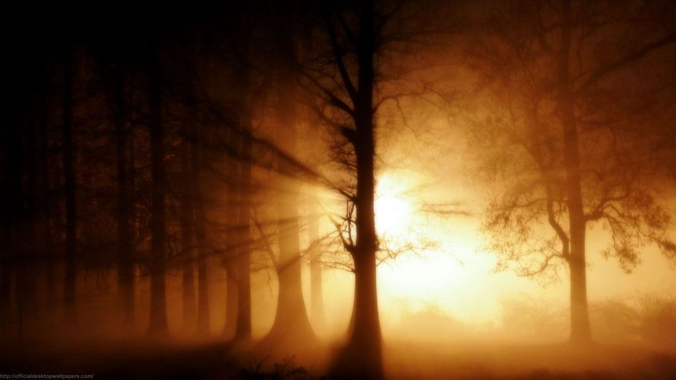Abstract Light In The Woods 78504 Wallpaper wallpaper