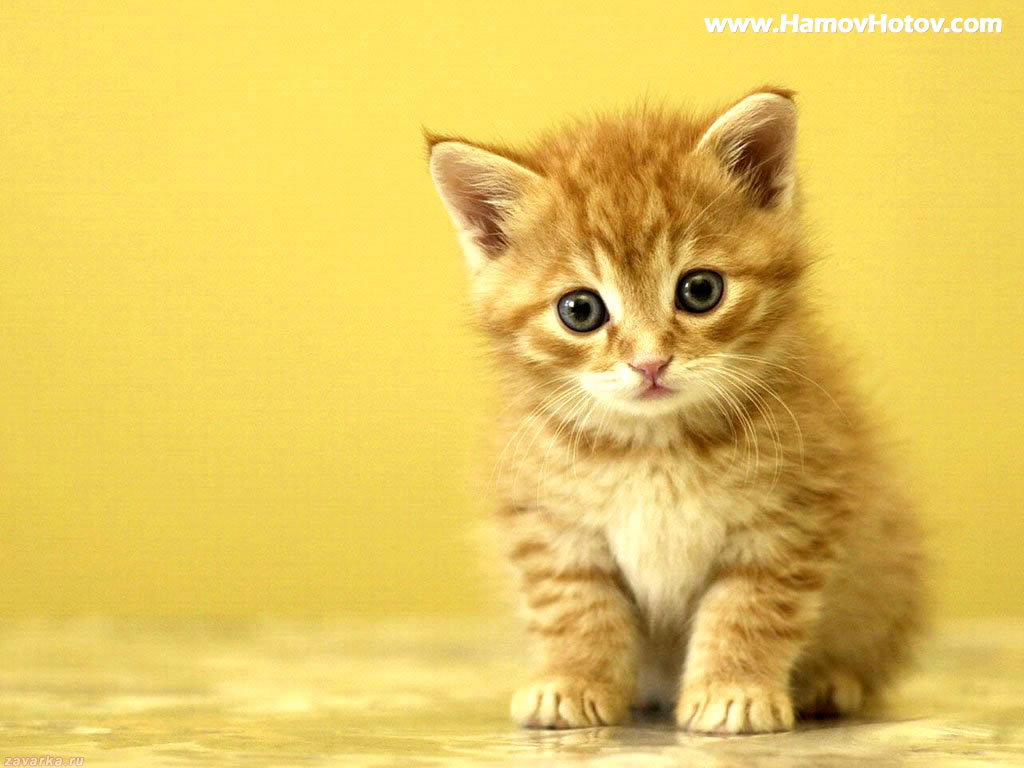 Animal Print Kitten 98572 Wallpaper wallpaper