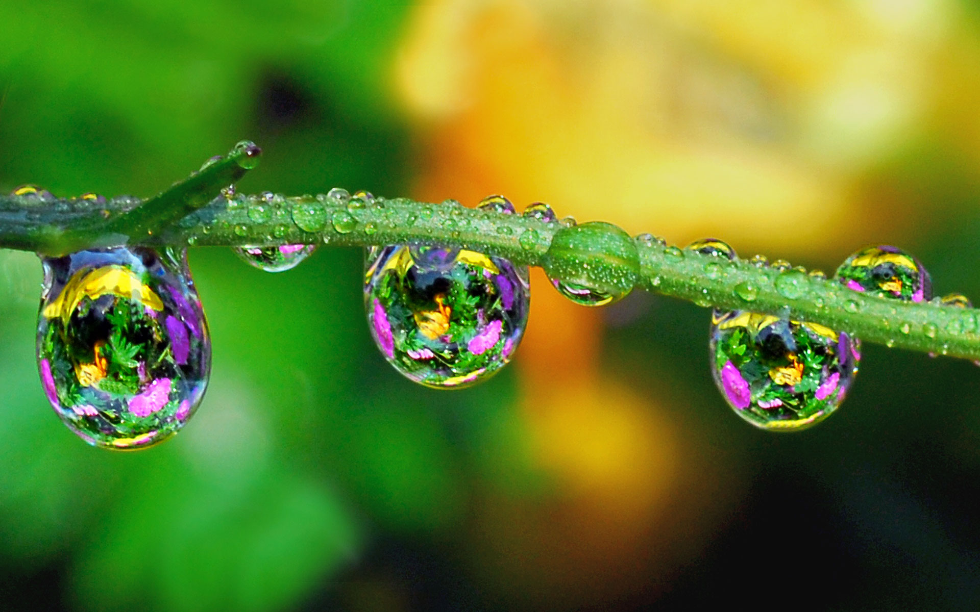 Abstract Water Drops Free 340555 Wallpaper wallpaper