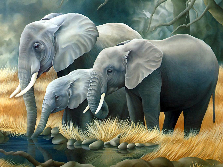 Safari animal cartoon elephants backgrounds