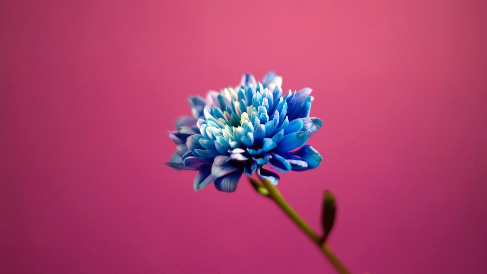 Pink Hd Abstract Best Top Desktop 84885 Wallpaper wallpaper