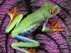 Animals Widescreen Fanpop 247942 Wallpaper wallpaper