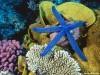 Animal Desktop Free Undersea 234195 Wallpaper wallpaper
