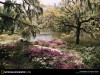 South Carolina Games Middleton Gardens P O Of The Day Picture 313054 Wallpaper wallpaper