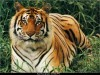 Wild Animals Pictures 150568 Wallpaper wallpaper