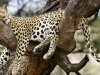 Animal Webshots V Site 360153 Wallpaper wallpaper