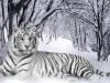 Animal X Roundup Extraordinary Widescreen 772490 Wallpaper wallpaper