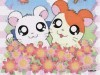 Anime Hamtaro 369383 Wallpaper wallpaper