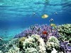 African Animals Of Free Tropical Fish Thousands 316042 Wallpaper wallpaper