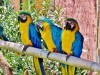 Wonderful Animalls Blue Gold Macaw In Animals Article Nr By Katrin 1592140 Wallpaper wallpaper