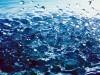 Abstract Water Drops Hd 658126 Wallpaper wallpaper