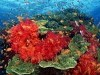 Animal Tropical Fish Albums V Site 431999 Wallpaper wallpaper