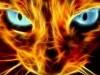 Abstract Cat Burning Open Walls 432884 Wallpaper wallpaper