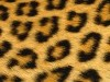 Animal Print External Image Leopard Skin Jpg 2084615 Wallpaper wallpaper