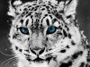 Abstract In White Leopard Hd P Wallszone 640145 Wallpaper wallpaper