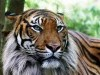 Animal Cats Fresh Desktop Life Liger Free 360107 Wallpaper wallpaper