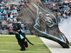 South Carolina Games Panthers Mascot 325805 Wallpaper wallpaper