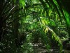 African Animals You Are Viewing The Jungle Scenes Named Palms It Has 205911 Wallpaper wallpaper